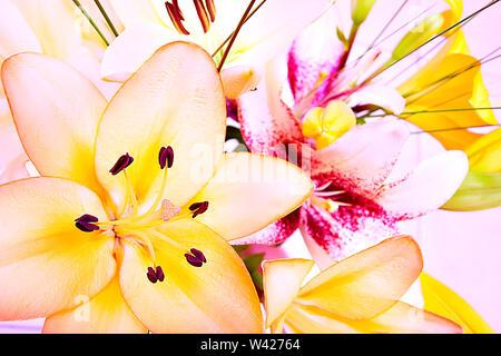 Bunte Bild einer Lilie Blumen einschließlich der gelben und roten Farben auf einem hellen Hintergrund. Details können gesehen werden klar die Blume an der Fokussierung und b - Stockfoto