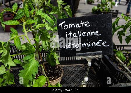 Eine Nahaufnahme eines kleinen französischen Zeichen, sagen Italienische Tomaten, während eine landwirtschaftliche Messe für Landwirte, mit jungen Tomatenpflanzen in umweltfreundliche Töpfe. - Stockfoto