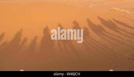 Schatten der Karawane wandern in Merzouga Wüste Sahara in Marokko - Stockfoto