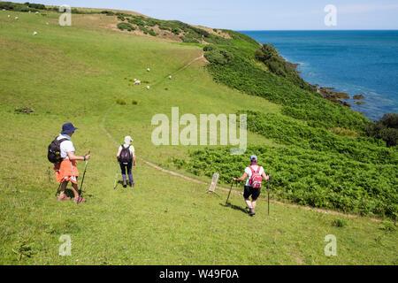 Wanderer zu Fuß auf malerische hügelige Anglesey Coastal Path durch ein Feld von Schaf im Sommer. Llaneilian, Isle of Anglesey, North Wales, UK, Großbritannien - Stockfoto