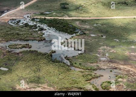 Dutzende von hippos im Pool aus der Luft gesehen, in der Nähe von Seronera, Serengeti, Tansania - Stockfoto