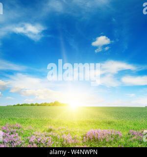 Die malerische Landschaft von grünen Frühling Weizenfeld und blauer Himmel. - Stockfoto