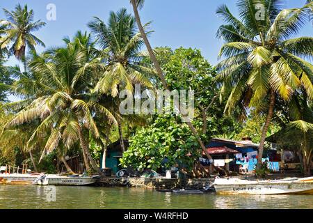 Sri Lanka, Balapitiya, Madu Gangariver - Stockfoto