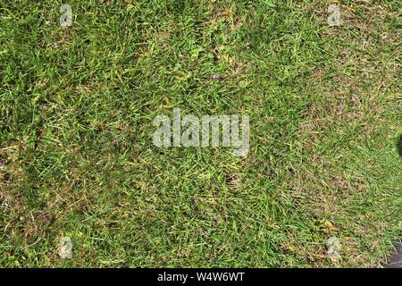Detaillierte Nahaufnahme auf grünem Gras Textur an einem Sommer Feld - Stockfoto