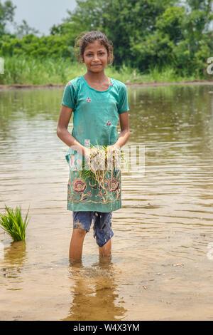Junge indische Mädchen Bauer hält Reis Setzlinge, wie sie Knöchel tief Spaziergänge im Reisfeld Feld - Stockfoto