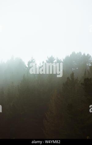 Wald mit Nebel, Nebel bäume landschaft in Wäldern, dunkle Spooky Halloween Hintergrund, Baum, Nebel, Umwelt und Wetter Konzept umgeben - Stockfoto