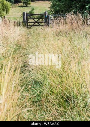 Eine grasbedeckte führender Pfad zu einem hölzernen Tor im Sommer in den Cotswolds. - Stockfoto