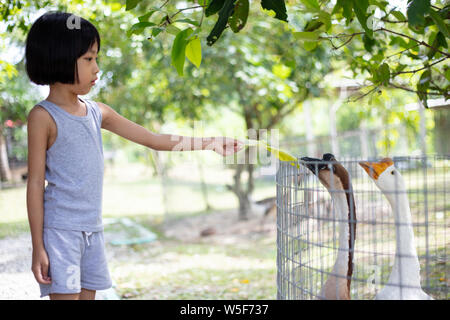 Asiatische kleinen chinesischen Mädchen füttern Gans im Hof - Stockfoto