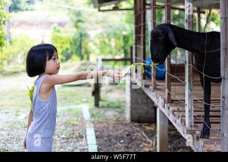 Asiatische kleinen chinesischen Mädchen Fütterung Ziege der Bauernhof im Freien - Stockfoto