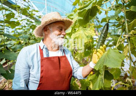 Schöne ältere Menschen wachsenden Gurken im Gewächshaus auf einem kleinen landwirtschaftlichen Betrieb. Konzept einer kleinen Agribusiness und Arbeiten im Rentenalter - Stockfoto