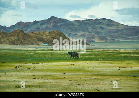 Landschaft von Weiden Yak, das Autofahren zu Dorbot Pass von Ulan-Baishint. Bayan-Olgii Provinz im Westen der Mongolei. - Stockfoto