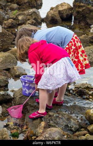 Mädchen/Mädchen/kid mit Angeln net/Kinder/Kind mit Schaufel / Kinder jagen in den Küstengebieten Rock Pools und Felsen an der Küste von Devon für Muscheln Meeresfrüchte, Fisch, Shell, und sogar Fossilien eingeschlossen - im Rock Pool mit Meerwasser, während der Ebbe. Großbritannien (110) - Stockfoto