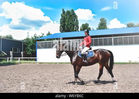 Junge hübsche Jockey Mädchen Pferd für die Fahrt vorbereiten. liebe Pferde - Stockfoto