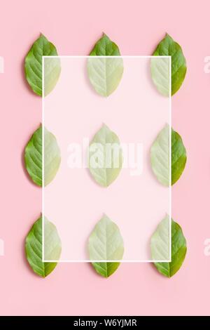 Kreative natürlichen Muster aus Blättern mit weißen Rahmen auf rosa Hintergrund - Stockfoto