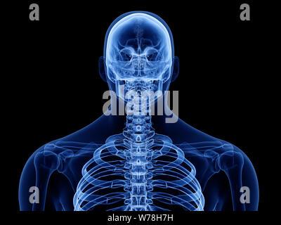 3D-gerenderte Medizinisch genaue Abbildung der Skelettmuskeln der oberen Karosserie - Stockfoto