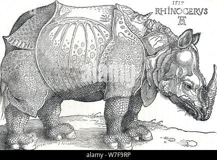 """Ein Nashorn"", 1515, (1906). Künstler: Albrecht Dürer. - Stockfoto"