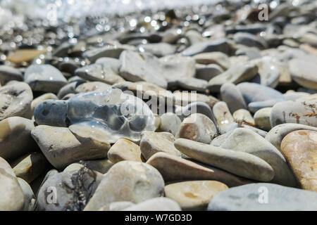 Transparenten meer Einwohner des Schwarzen Meeres, Quallen, auf der felsigen Ufer des Meeres geworfen. Stockfoto