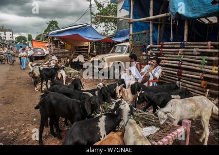 Kolkata, Indien. 6 Aug, 2019. Verkäufer sind mit ihren Herden auf einem viehmarkt vor Eid al-Adha, hat keine bestimmte Zeitdauer und Festival in Kolkata, Indien, Aug 6, 2019 gesehen. Credit: tumpa Mondal/Xinhua/Alamy leben Nachrichten - Stockfoto