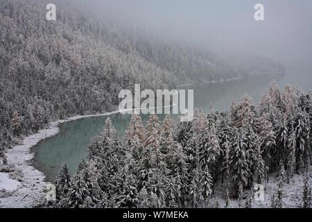 Erster Schnee auf Kucherlinskoe, Tarn See von Altai Mts in den rocky Katunsky Produktpalette mit typischen Altai Bergwald mit Sibirischen Lärche Bäume (Larus Pumila) und Sibirische Kiefer (Pinus Pumila) Mt. belukha Naturpark umgeben, Sibirien, Russland, Oktober 2010. - Stockfoto