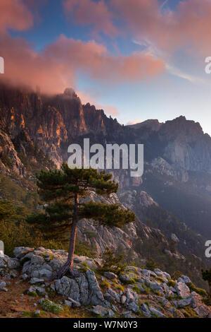 Den Col de Bavella mit Pine Tree in der Morgendämmerung, Korsika, Frankreich. Juni 2011 - Stockfoto
