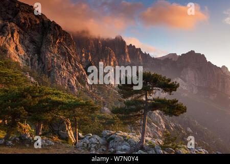 Den Col de Bavella mit Pine Tree in der Morgendämmerung, Korsika, Frankreich. Juni 2011. - Stockfoto