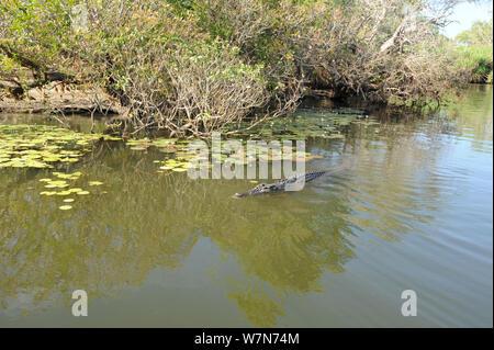 Salzwasser Krokodil (Crocodylus porosus) Kakadu Nationalpark. Northern Territory. Australien. - Stockfoto