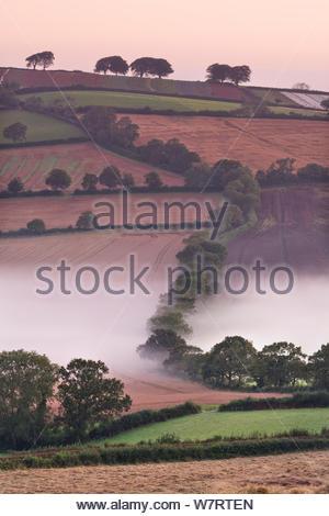 Nebel Rollenackerland, stockleigh Pomeroy, Devon, England. September 2012. - Stockfoto