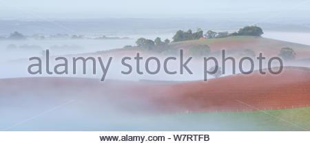 Nebel Rollenackerland, Neubauten, Devon, England. September 2012. - Stockfoto