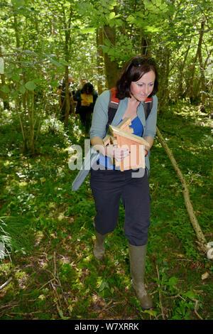 Freiwillige, die ein Nest mit einem Paar von Hazel haselmäuse (Muscardinus avellanarius) und eine leere Box in Coppiced alten Wald sie sowohl in einem ' Soft Release ' Käfig zu einem Baum, Nottinghamshire, UK, Juni beigefügt. Model Released. - Stockfoto