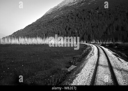 Bahngleise überqueren einer petrified Forrest in Alaska - Stockfoto