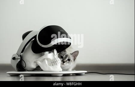 Weiße Schädel auf einem Stand in einem VR-Helm. Graue Katze digitale Konzept - Stockfoto