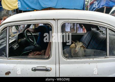 Kolkata, West Bengal, Indien. 9 Aug, 2019. Eine Ziege im Taxi gesehen nach dem Kauf auf einen viehmarkt vor den Eid al-Adha, hat keine bestimmte Zeitdauer und Festival in Kalkutta. Eid Al Adha ist ein Festival im Islam auch als Festival der Opfer bekannt. Credit: Avijit Ghosh/SOPA Images/ZUMA Draht/Alamy leben Nachrichten - Stockfoto