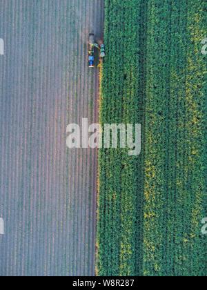 Antenne von mechanischen Zuckerrohr Ernte Maschinen bei der Arbeit mit der Ernte der Ernte bei Wallaville in der Nähe von Bundaberg Queensland Australien - Stockfoto
