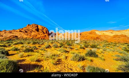 Bunte Sandstein Berge bei Sonnenaufgang auf dem Rainbow Vista Trail im Valley of Fire State Park in Nevada, USA - Stockfoto