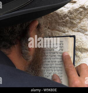 Nahaufnahme eines orthodoxen Juden holding Gebetbuch gegen die Wand und betete, Klagemauer, Jerusalem, Israel, Naher Osten - Stockfoto