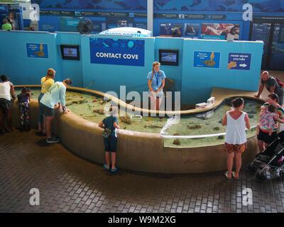 Kinder und Eltern zu petting Tank in Mote Aquarium, Florida, USA, 6. April 2019, © katharine Andriotis - Stockfoto