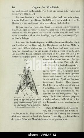 Anatomie des Frosches (Seite 10) sterben - Stockfoto