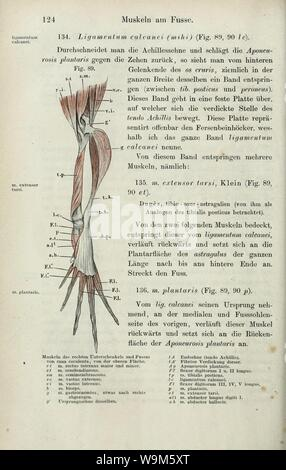 Anatomie des Frosches (Seite 124) sterben - Stockfoto