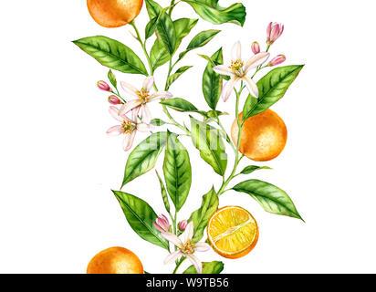 Orange Frucht nahtlose grenzüberschreitende Ast mit Blumen realistische Botanischen floral Oberfläche Design: Ganze halbe Zitrusfrucht Blätter auf weiße Hand isoliert gezeichnet