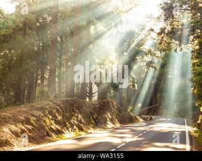 Sonnenstrahlen im Wald auf der Straße - Stockfoto