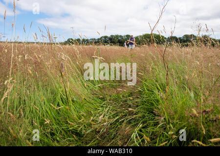 Pfad beschritten abgeflacht durch eine Heu wiese feld mit Menschen zu Fuß auf öffentlichen Fußweg im Sommer. Benllech, Isle of Anglesey, Wales, Großbritannien, Großbritannien - Stockfoto