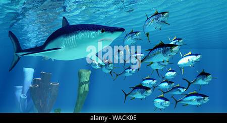 Eine fleischfressende Makrelenhai Hai verfolgt eine Schule von Gelbflossenthun im Pazifischen Ozean. - Stockfoto