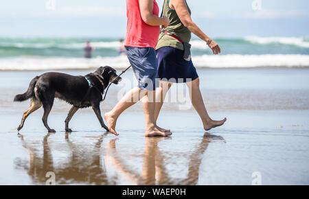 Zwei dynamische Frauen in Shorts und T-shirts Barfuß wandern mit einem dunklen Labrador Retriever Hund entlang der Spiegelfläche von Wasser des Pazifischen Ozeans in der - Stockfoto