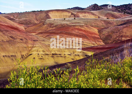 Gelbe blumen in Painted Hills, John Day Fossil Beds National Monument, Mitchell, Oregon, USA. - Stockfoto