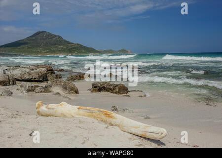 Kap der Guten Hoffnung, Cape Town, Südafrika - 4. November 2017: ein riesiger walknochen am Strand mit Wellen im Hintergrund gestrandet an einem sonnigen Tag - Stockfoto