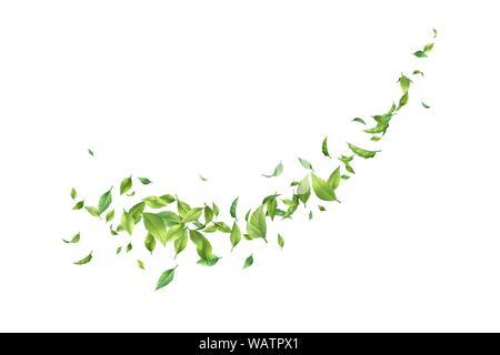 Vektor Blätter Wirbeln im Wind. Grüne Blätter in motion auf weißem Hintergrund - Stockfoto