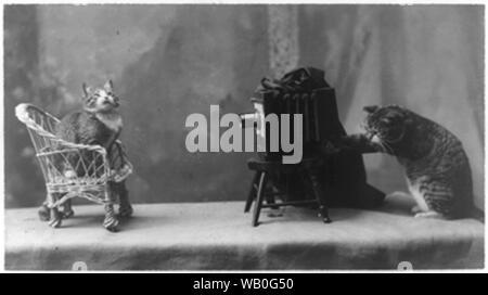Eine Katze Fotograf - Stockfoto