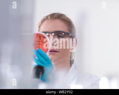 Mikrobiologie Forschung. Wissenschaftler untersuchen Bakterienkulturen wachsen in Petrischalen. - Stockfoto
