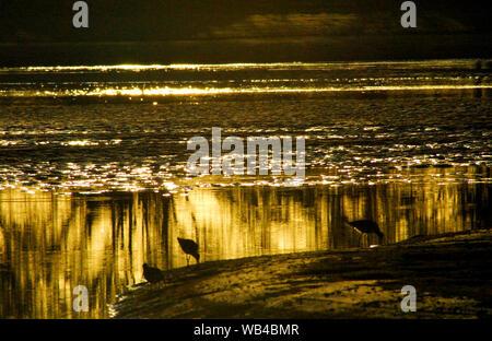 Schöne glitzernde Silhouette Sonnenuntergang Licht am Ufer Vögel wider, wie Sie am Wasser entlang des Abweisblechs Creek, Australien. - Stockfoto
