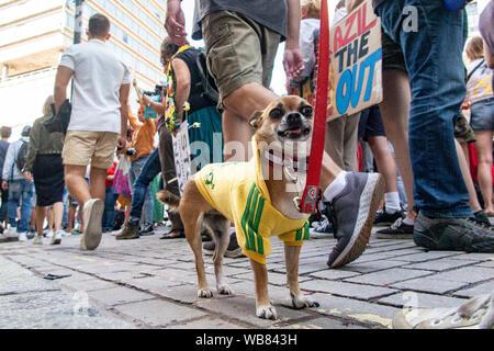London, England, Großbritannien, 23. August 2019. Umweltaktivisten sammeln an der Brasilianischen Botschaft an die brennende Regenwälder zu protestieren - Stockfoto
